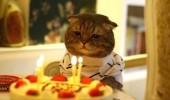 sad thinking cat year older birthday cake hat candles lolcat animal funny pics pictures pic picture image photo images photos lol