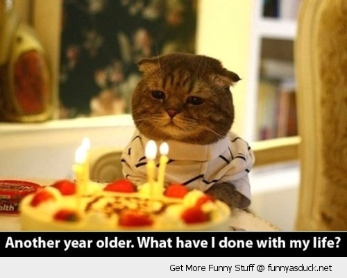 [Image: funny-sad-cat-birthday-party-cake-candle...r-pics.jpg]