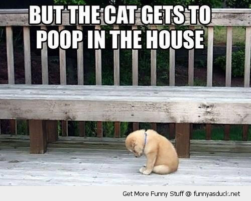 sad puppy dog animal cat poop in house funny pics pictures pic picture image photo images photos lol