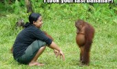 sad monkey eat banana orangutan worst woman jungle funny pics pictures pic picture image photo images photos lol
