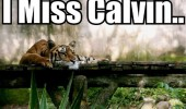 i miss calvin sad tiger hobbes comic strip animal jungle funny pics pictures pic picture image photo images photos lol
