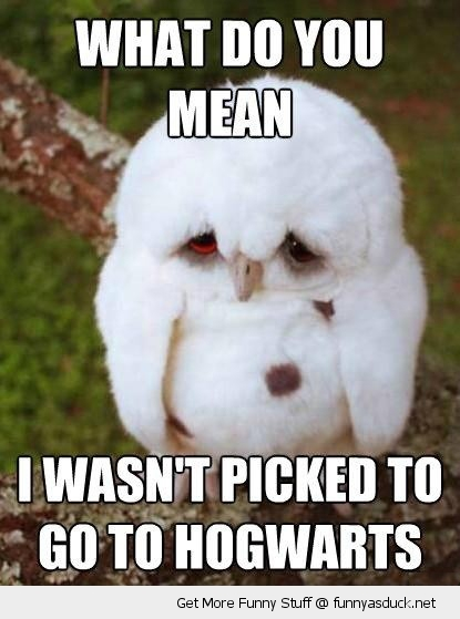 sad unhappy cute baby owl picked hogwarts harry potter animal funny pics pictures pic picture image photo images photos lol