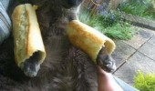 sandwich cat lolcat animal bread on legs paws funny pics pictures pic picture image photo images photos lol