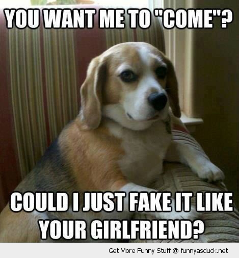 sarcastic skeptical dog animal come fake it like you girlfriend couch sofa funny pics pictures pic picture image photo images photos lol