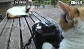 say cheese photographer cat go away grumpy lolcat animal funny pics pictures pic picture image photo images photos lol