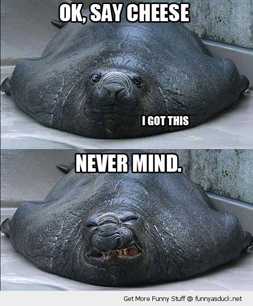 say cheese ugly angry smile got this animal seal funny pics pictures pic picture image photo images photos lol