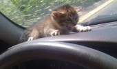 scared cat kitten animal car dashboard slow down kill us both funny pics pictures pic picture image photo images photos lol