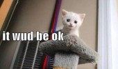 scared sad cat kitten lolcat animal scratching post cute call fire department funny pics pictures pic picture image photo images photos lol