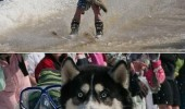 huge terrible mistake dog husky animal scared shocked skiing funny pics pictures pic picture image photo images photos lol