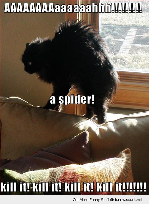 scared shocked cat lolcat animal bed spider kill it funny pics pictures pic picture image photo images photos lol