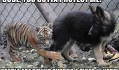 scared baby tiger animal dog cage protect me funny pics pictures pic picture image photo images photos lol