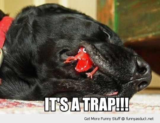 its a trap toy dogs mouth animal eating chew funny pics pictures pic picture image photo images photos lol