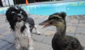 scared shocked wet dog animal duck is going on funny pics pictures pic picture image photo images photos lol