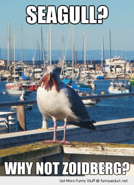 seagull bird animal eating starfish why not zoidberg futurama tv funny pics pictures pic picture image photo images photos lol