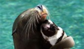 seal sea lion cuddling hugging penguin squeeze him cute animal funny pics pictures pic picture image photo images photos lol