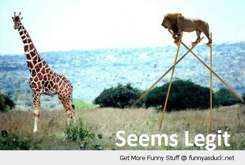 seems legit lion stilts giraffe animal hunting funny pics pictures pic picture image photo images photos lol
