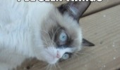 seen things wouldn't believe grumpy angry cat lolcat animal sad funny pics pictures pic picture image photo images photos lol