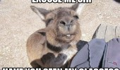 excuse me sir glasses kangaroo squinting eyes animal funny pics pictures pic picture image photo images photos lol