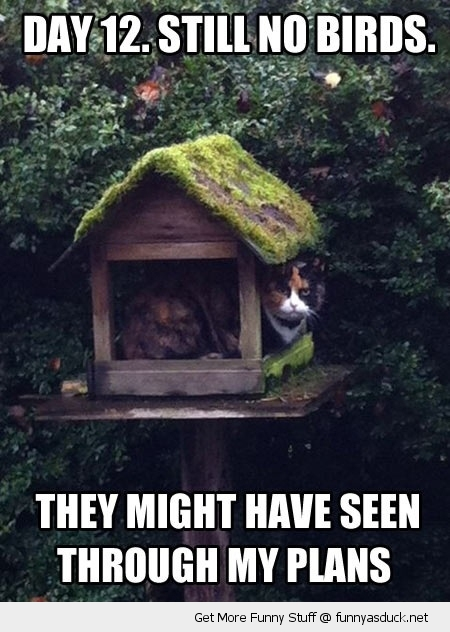 cat lolcat animal hiding bird house seen through plans funny pics pictures pic picture image photo images photos lol