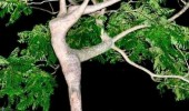 shaped tree i must dance forest nature stop that funny pics pictures pic picture image photo images photos lol