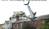 shark crashed roof house go home drunk funny pics pictures pic picture image photo images photos lol