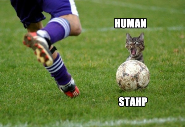 human stahp cat lolcat animal ball kick soccer football player funny pics pictures pic picture image photo images photos lol