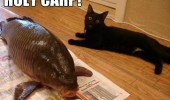 holy carp shocked surprised cat animal huge fish massive big funny pics pictures pic picture image photo images photos lol