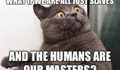 shocked surprised cat animal lolcat humans masters slaves funny pics pictures pic picture image photo images photos lol