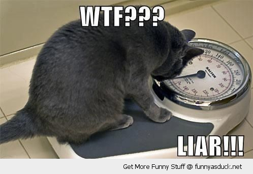 cat lolcat animal on scales weigh fat wtf liar funny pics pictures pic picture image photo images photos lol