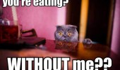 shocked surprised cat animal eating without me dining table lolcat funny pics pictures pic picture image photo images photos lol