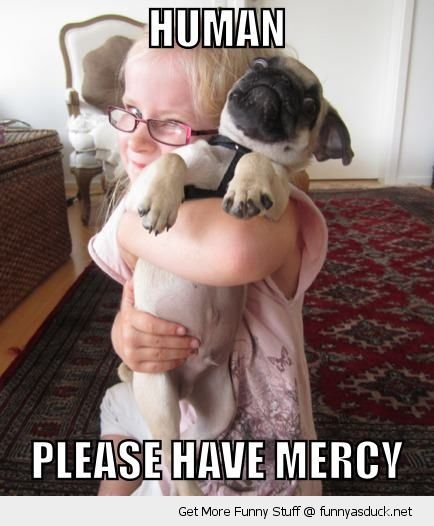 human have mercy girl hugging squeezing dog pug animal shocked surprised funny pics pictures pic picture image photo images photos lol