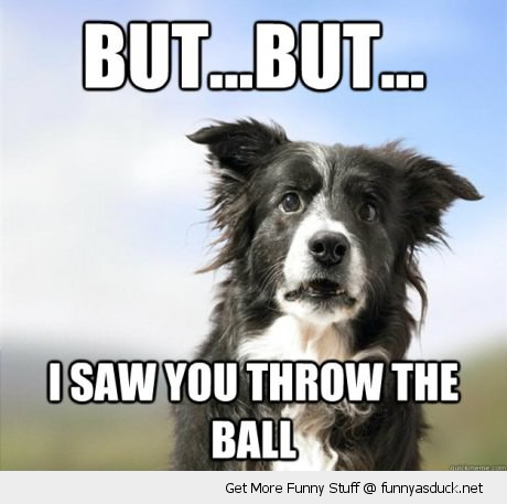 shocked surprised dog he saw throw ball animal confused funny pics pictures pic picture image photo images photos lol