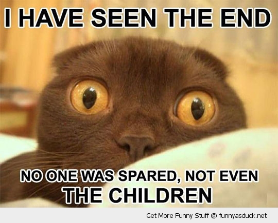seen the end cat lolcat animal shocked scared funny pics pictures pic picture image photo images photos lol