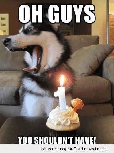 funny-shouldnt-have-birthday-dog-husky-p