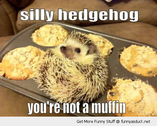 silly hedgeho animal cute baking tray not a muffin cake funny pics pictures pic picture image photo images photos lol