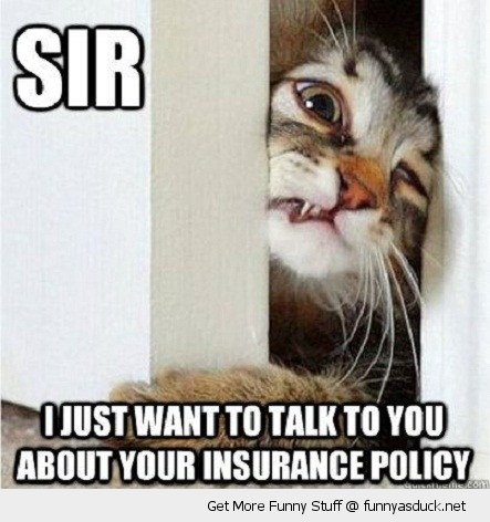 sir cat lolcat animal door just want to talk insurance policy stuck face paw squeeze funny pics pictures pic picture image photo images photos lol