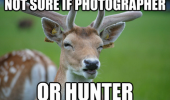 skeptical deer photographer hunter suspicious animal funny pics pictures pic picture image photo images photos lol