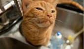 skeptical cat animal lolcat sink telling me control red dot funny pics pictures pic picture image photo images photos lol