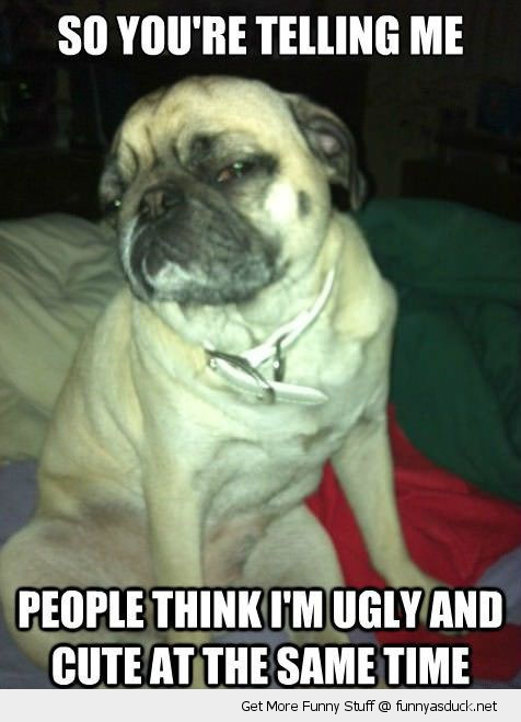 skeptical pug dog animal ugly cute same time funny pics pictures pic picture image photo images photos lol