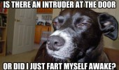 skeptical suspicious dog fart awake intruder animal funny pics pictures pic picture image photo images photos lol