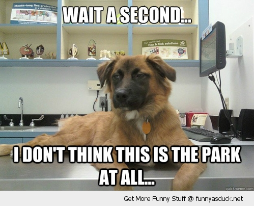 skeptical suspicious dog animal vet not park funny pics pictures pic picture image photo images photos lol