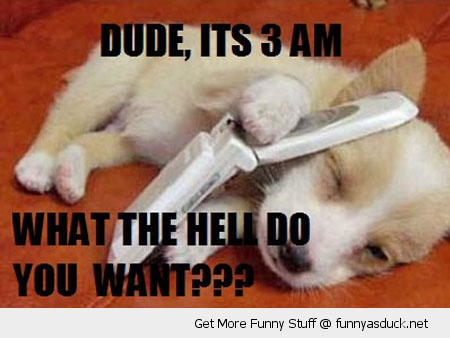 dude its 3am dog sleeping animal phone funny pics pictures pic picture image photo images photos lol