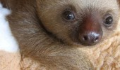 cute baby sloth animal sleep a lot energy more funny pics pictures pic picture image photo images photos lol