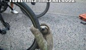 cute baby sloth hugging tire bike bicycle wheel cuddling animal funny pics pictures pic picture image photo images photos lol