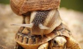slow down turtle tortoise snail back animal funny pics pictures pic picture image photo images photos lol