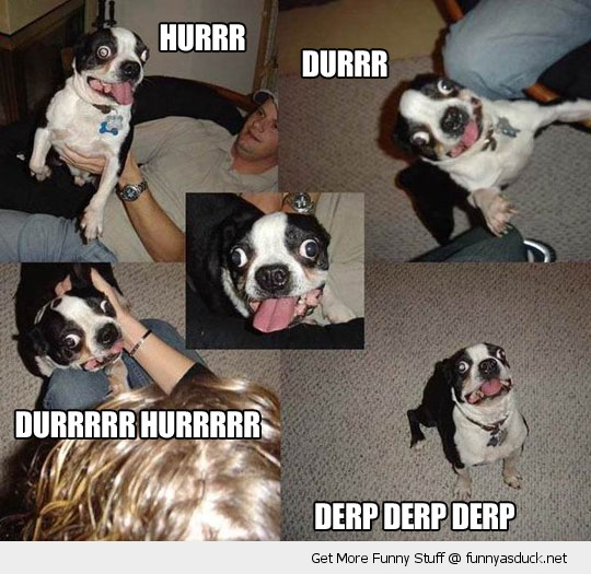 Derp Derp | Funny As Duck | Funny Pictures