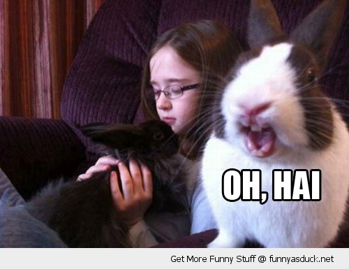 oh hi hai happy smiling rabbit bunny animal funny pics pictures pic picture image photo images photos lol