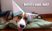 hell of a night dog animal birthday party hats ears bed funny pics pictures pic picture image photo images photos lol