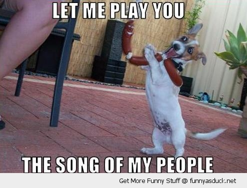 song of people dog instrument sausage toy playing animal funny pics pictures pic picture image photo images photos lol