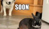 soon angry dog rabbit bunny door animal funny pics pictures pic picture image photo images photos lol